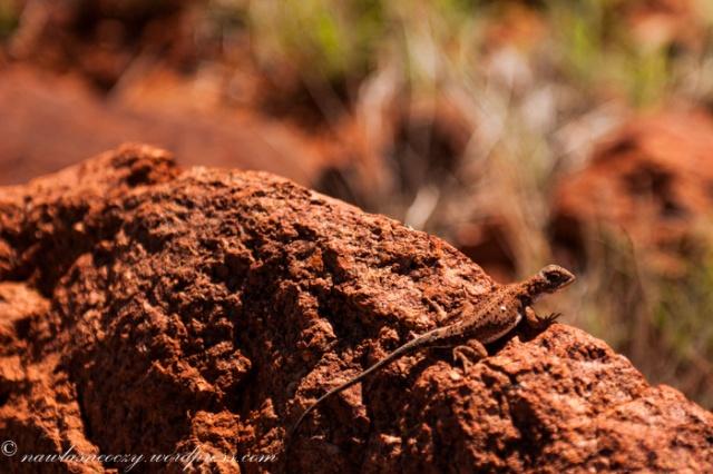 na skalkach po drodze mozna zauwazyc wygrzewajace sie jaszczurki